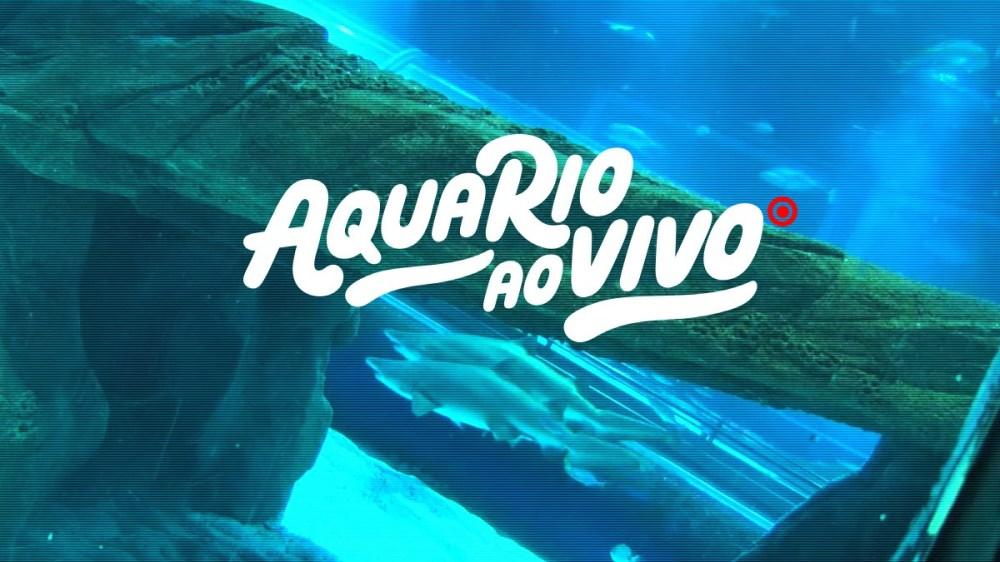 aquario_ao_vivo_grande_tanque_oceanico